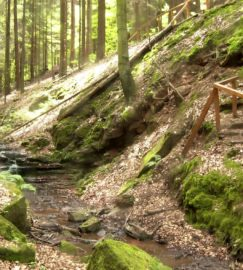 Sagenhafter Waldpfad